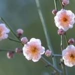 NHK朝の連ドラ「あさが来た」から学ぶ、ていねいな生き方